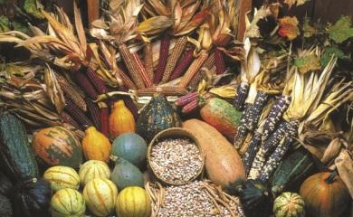 Haudenosaunee corn beans squash Seed Savers Exchange