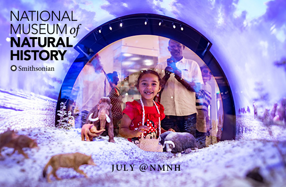 July @NMNH - Smiling young visitor looks into diorama