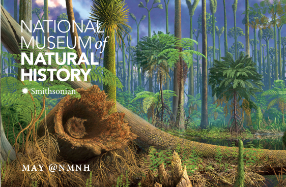 May @NMNH - Carboniferous Forest