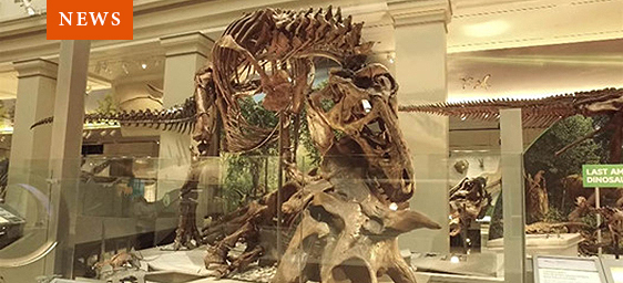 T. rex in the Fossil Hall