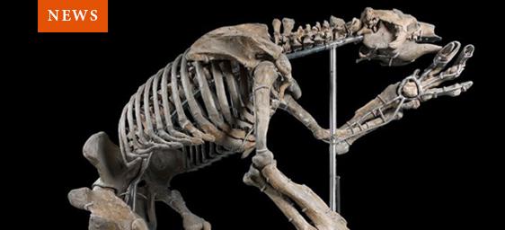 News - Giant Sloth