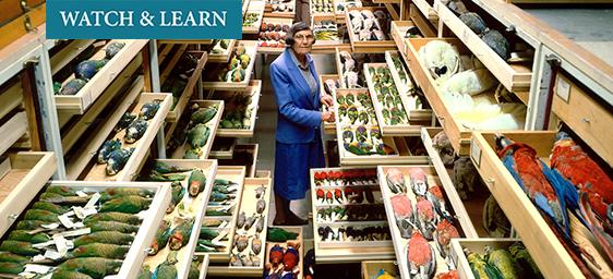 Watch & Learn - Roxie Laybourne with Bird Specimens