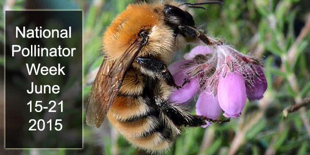 biopix_bumblebee_web.jpg
